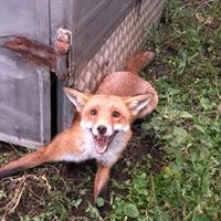 Fox Control services in Melbourne