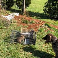 wildlife Rabbit Control in Melbourne