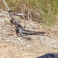 wildlife Snake Catching & Removal Services provider in australia