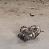 wildlife Snake Catching & Removal service provider in Melbourne