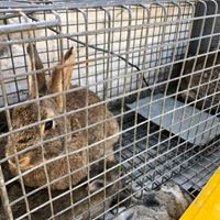 wildlife pestcontrol Rabbit Control in Melbourne