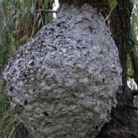 wildlife pestcontrol Termite Control in Melbourne