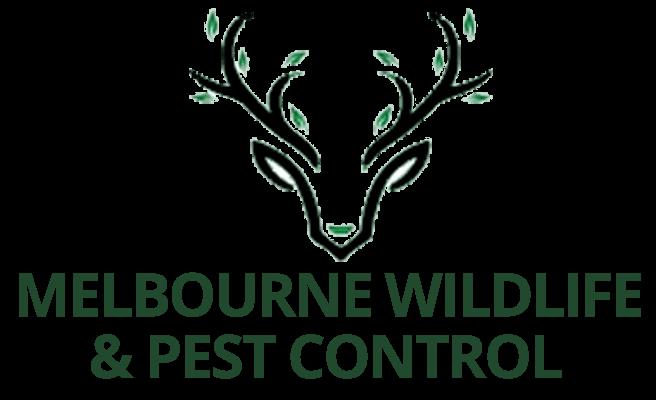 Melbourne Wildlife & Pest Control